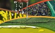 Feria de Agropriego - Calor Renove
