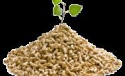 Comprar de hueso de aceituna Cabra - Calor Renove